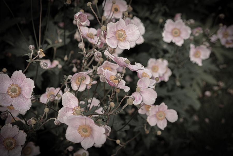 Engla and the Garden.