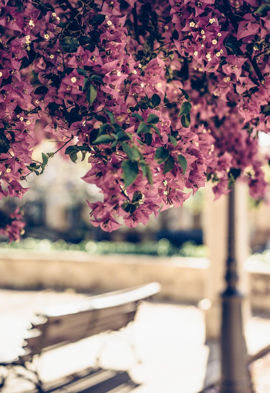 lovely life-06633
