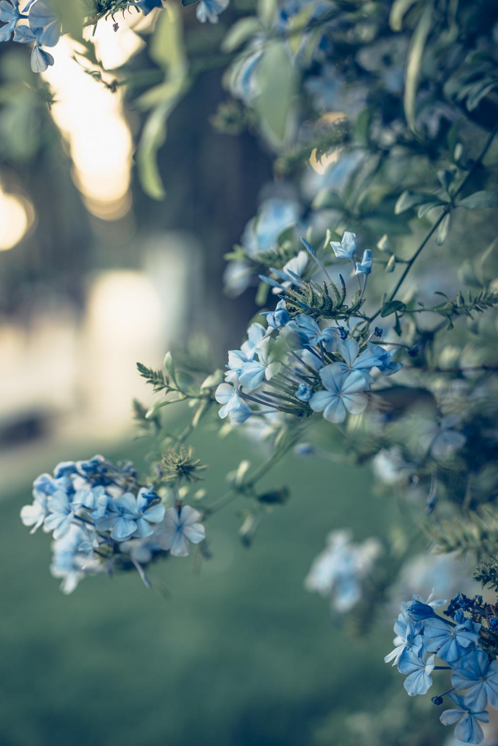 lovely life-06698